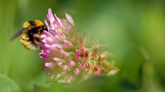 ekologiskt-krav-jannelunds-gard-ekobonden-planetskotare-blommor-bin-bee-urban